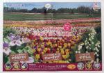 滝野すずらん丘陵公園 チラシ発行日:2013/5/18