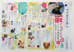 東急百貨店 チラシ発行日:2017/2/2